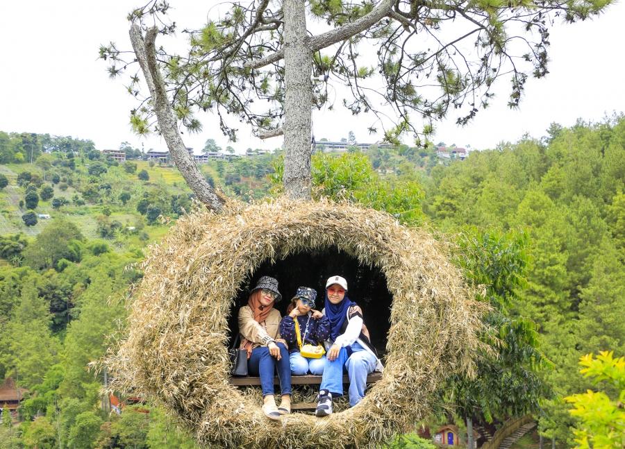 Hasil gambar untuk bird nest dago dream park